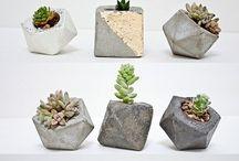 Kakteen I Cactus / Kaktus