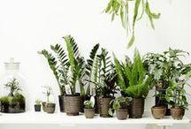 ༆ Plants ༆
