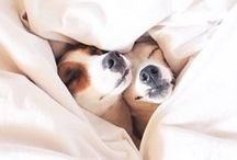 Dogs / Dogs for #thewittydog 100% Organic Bio dog food