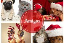 Cute amigo's / Fotos graciosas