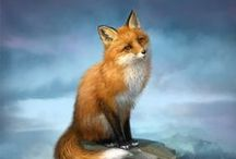 What does the Fox say? / I love Foxes!!!