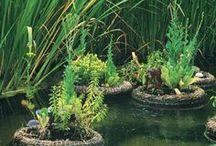 Aquaponics, Gardening, Ponds & Terrariums / Title says it all.