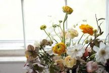 Workshops / Creative Work Spaces & Projects ~ windows, light, flowers, herbs