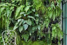 Meu mundo verde