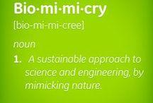 Biomimetics / Bionik / Process Management & Engineering Ingenuity by Nature