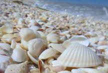 ocean, beach, shell
