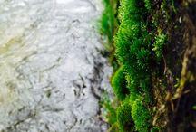 Végétal / Nature et création végétal   (*Photo iPhone)