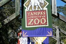 Tampa -Fl