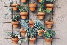 g r e e n / my love for plants