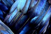 L'heure bleue / Blue color, bleu, inspiration, l'instant bleu