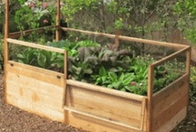 The Community Garden / A NEW community board for gardening ideas! Post pins for beautiful vegetable and flower gardens, tips and tricks for effective gardening, and garden architecture. Once you've joined you can pin your favorite pins directly to this board, and even repin ones on your own boards.