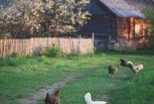 Farm Dreams