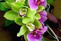 Orchid. Орхидея. / /