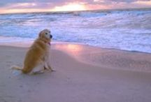 The Pets of St. George / Come to St. George Island with your furry friend and enjoy a wonderful pet-friendly experience!