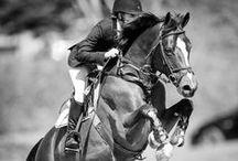 L'équitation, ma passion / Faîtes du cheval un compagnon et non un esclave, vous verrez quel ami extraordinaire il est. #équitation #horse