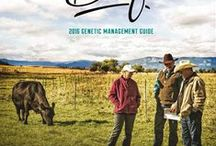 Beef Cattle Genetics / Discover the Genex beef bull lineup, understand beef cattle genetics and witness the opportunity for herd improvement through A.I. and chute-side service