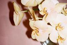 Flower power / Bloom baby, bloom.