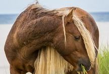 Equine photography / Horses as they really are.. Strong, caring, friendly, wild and free.