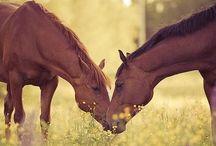 Horses / Koně :3