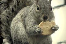 Animals/squirrel/etc....