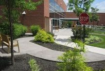 Physical Therapy Garden / Gardens created for physical, occupational, speech and horticultural therapy.