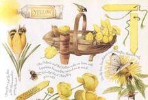 Yellow / Amarillo amarelo / by Adriana Kon