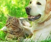 Pets are Best Friends