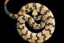 Animals/Reptiles