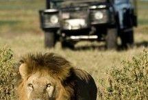 ht-Safari