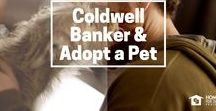 Adopt-a-Pet & Coldwell Banker / Finding a forever home for 20,000 pets!