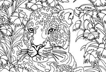 COLOURING: ANIMALS