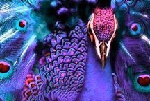 Peacocks-royal magnificence of !!!