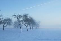 Pics: Trees