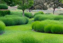 Garden Design / Garden style