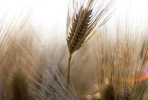 Grass and grain