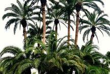 Print Idea - Palms