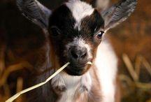 I'm HOT. I'm DIRTY. I FARM. / by Lindsey Smith