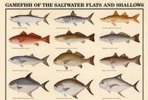 Fishing / All Things Fishing