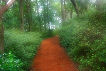 Walking in the garden in the cool of the evening... / The walk, the way, the path... / by Diana Hinchman