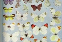 Butterflies, Moths, & Caterpillars