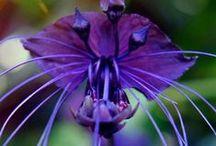 flowers / rosliny