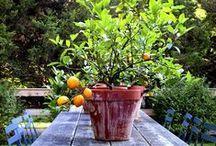 ♨︎ Garden and Plant Pot ideas