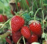Gardening and Growing / Gardening, grow your own, inspiration for your garden design.