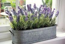 Indoor Plants ⚘ /  Plantes d'intérieur