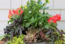Flowers Make Us Happy / From Annuals to Perennials, from Trees to Shrubs to Edibles, we've got everything you need for balcony, patio and backyard plants.