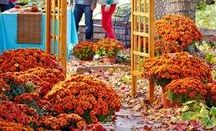 Make Fall Fantastic / From raking to renovating, we've got it all for fall. Let's get ready for the season of beautiful leaves and colours.