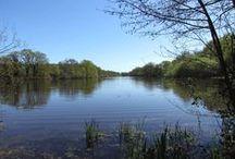 Les étangs de Sologne / Les quelques 3 000 étangs que compte aujourd'hui la Sologne ont été créés pour la plupart avant le XIXème siècle afin d'assainir la région, de produire du poisson, d'abreuver les animaux et de fournir de la végétation pour diverses utilisations. Outre l'agrément qu'apporte la présence d'une étendue d'eau, les étangs récents ont généralement été créés pour pratiquer la chasse. Un tiers des étangs seulement est géré en pisciculture.