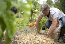 Astuces de Jardiniers - tips and tricks for gardeners / Jardiniers amateurs, vous souhaitez découvrir ou redécouvrir des techniques naturelles pour l'entretien de votre jardin, ces astuces de jardinage sont faites pour vous ! 1) Vous voulez que votre jardin devienne un havre de paix pour les animaux ? 2) Vous souhaitez nourrir votre sol tout en respectant l'environnement ? 3) Vous voulez lutter naturellement contre les insectes ravageurs ? 4) Vous désirez protéger votre sol pour faire des économies d'eau et empêcher la pousse des herbes folles ? http://www.sologne-nature.org/l-association/adh