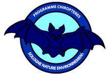 Chauves-souris de Sologne - Découverte des Chiroptères solognots - Bats / Sologne Nature Environnement étudie depuis longtemps les chauves-souris (Chiroptères) présentes sur son territoire. Les premières études étaient essentiellement liées à de la capture au filet ou à des comptages des sites d'hibernation. Cette dynamique associative s'est développée en ajoutant depuis 2011 la recherche des gîtes de mise-bas et l'étude des territoires de chasse (notamment en milieu forestier) des Chiroptères. http://www.sologne-nature.org/le-pole-etude/inventaires/les-chiropteres