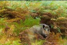 Fougères de Sologne et plantes alliées / Les fougères font partie intégrante des paysages de Sologne - Ce qui est appelé 'plantes alliées' regroupe ici, principalement, la famille des prêles qui botaniquement sont associées aux fougères